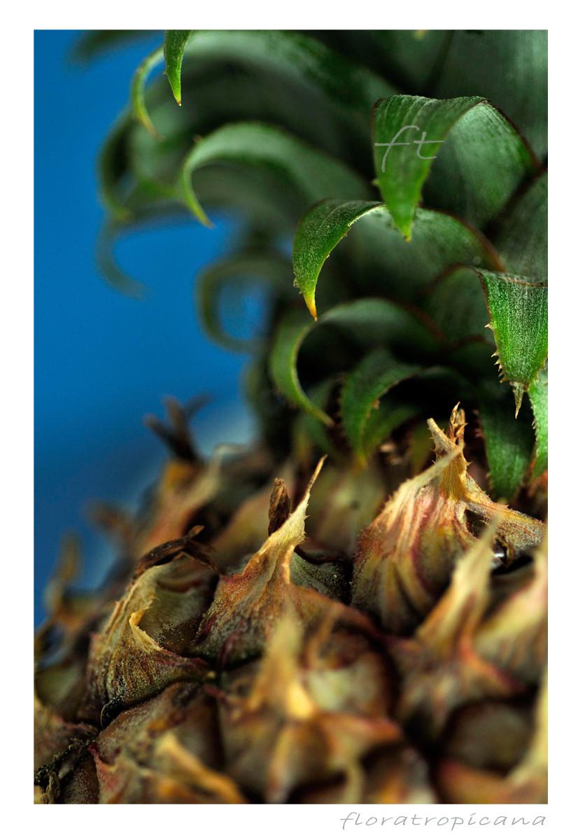 Owoc ananasa jadalnego