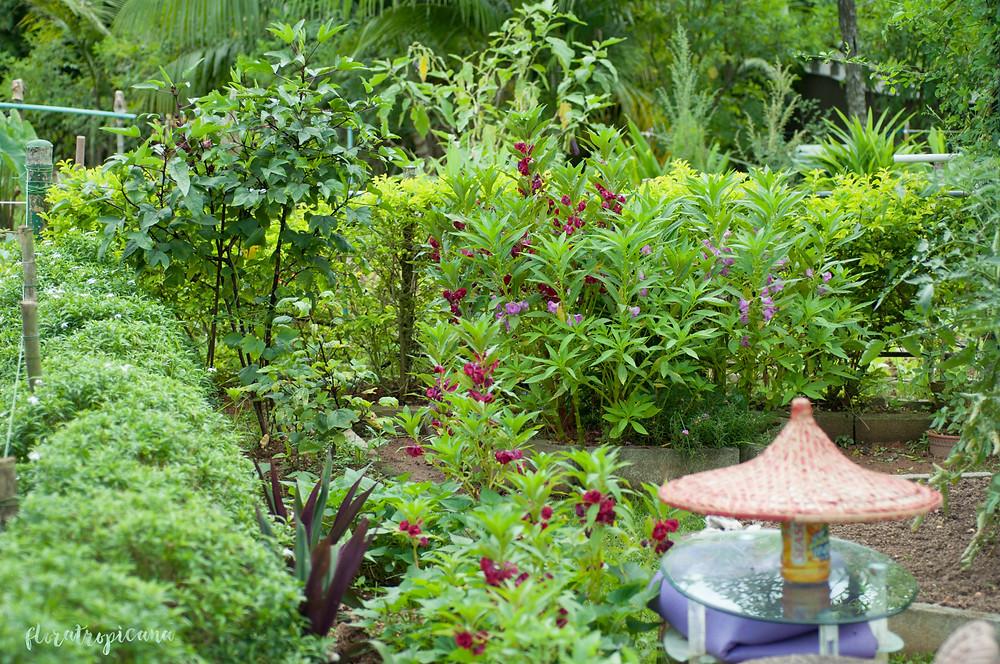 Tropikalny ogródek warzywno-owocowy. Singapur.