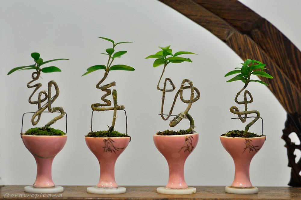 Bonsai plants, Singapore Garden Festival