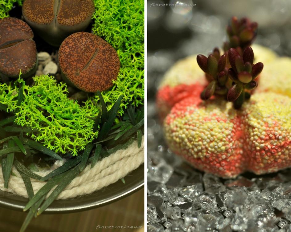 Decorating With House Plants, Sushi plants, Singapore Garden Festival