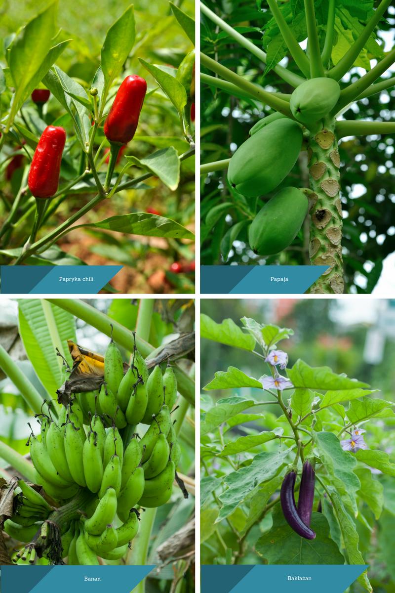 Tropikalne warzywa i owoce.