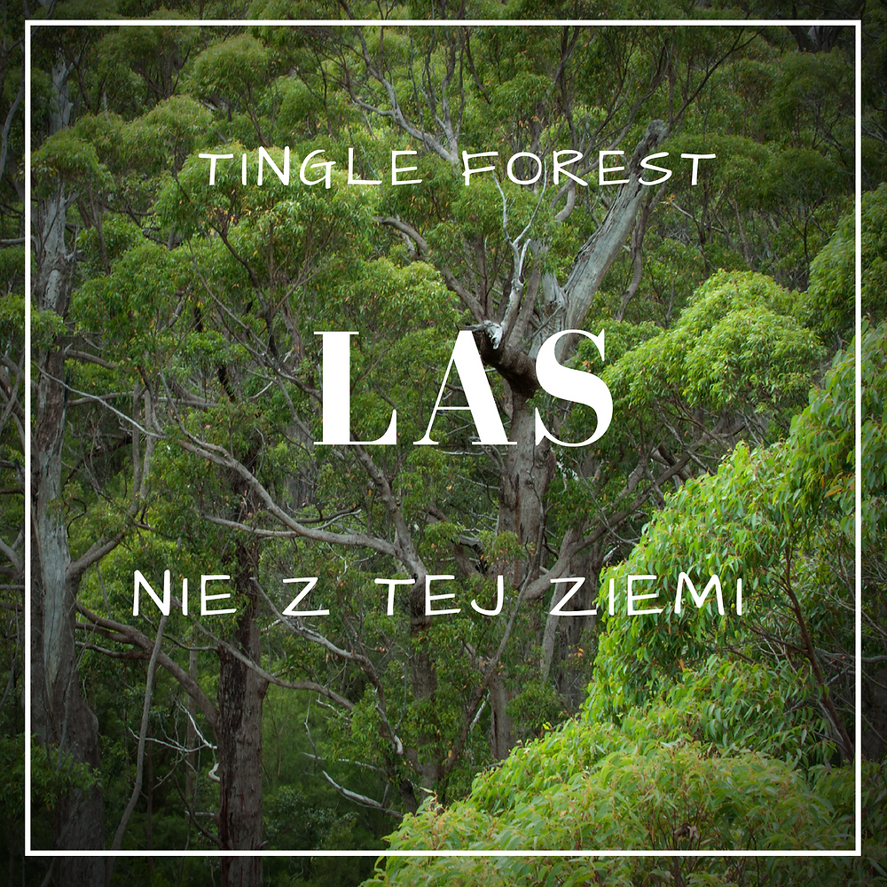 Tingle forest