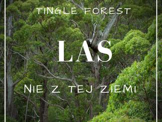 Las nie z tej ziemi.