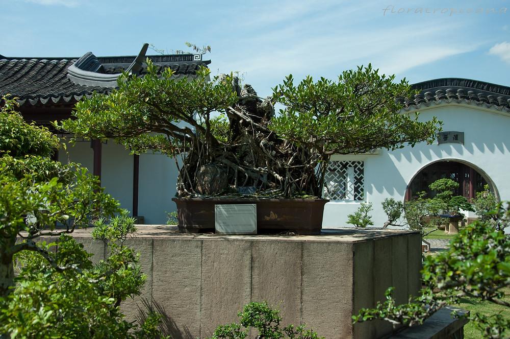 Chinese Garden, Bonsai, Singapore