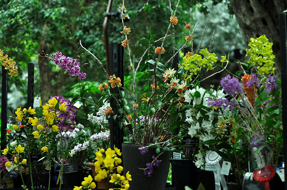 Gardens by the Bay, Orchid Extravaganza 2016
