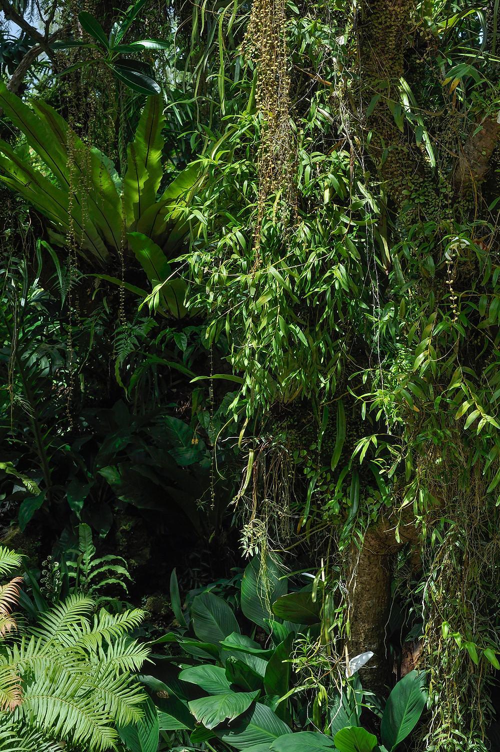 Ogród Botaniczny w Singapurze