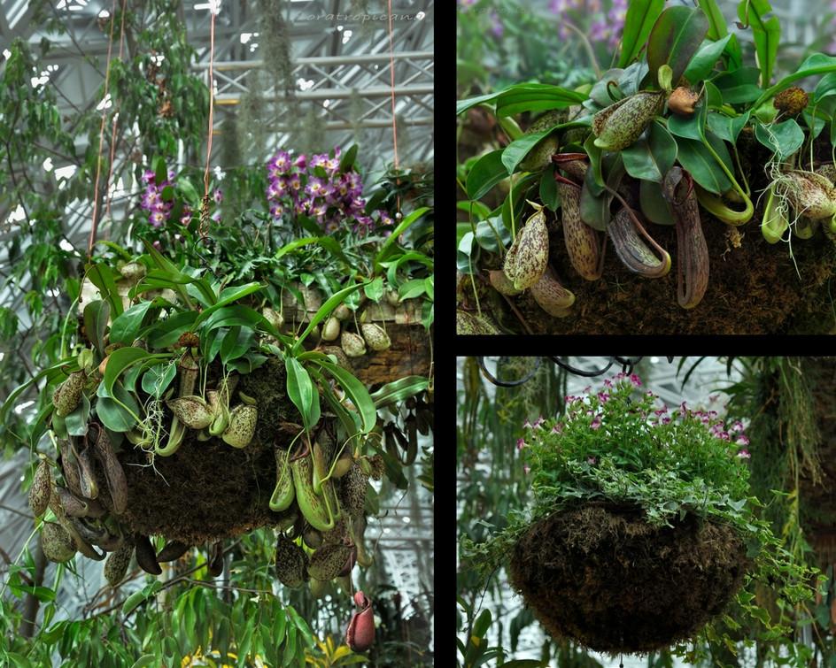 Hanging baskets, Singapore Garden Festival