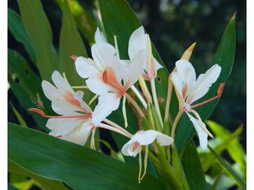 Roślinne ciekawostki z tropikalnej szkółki