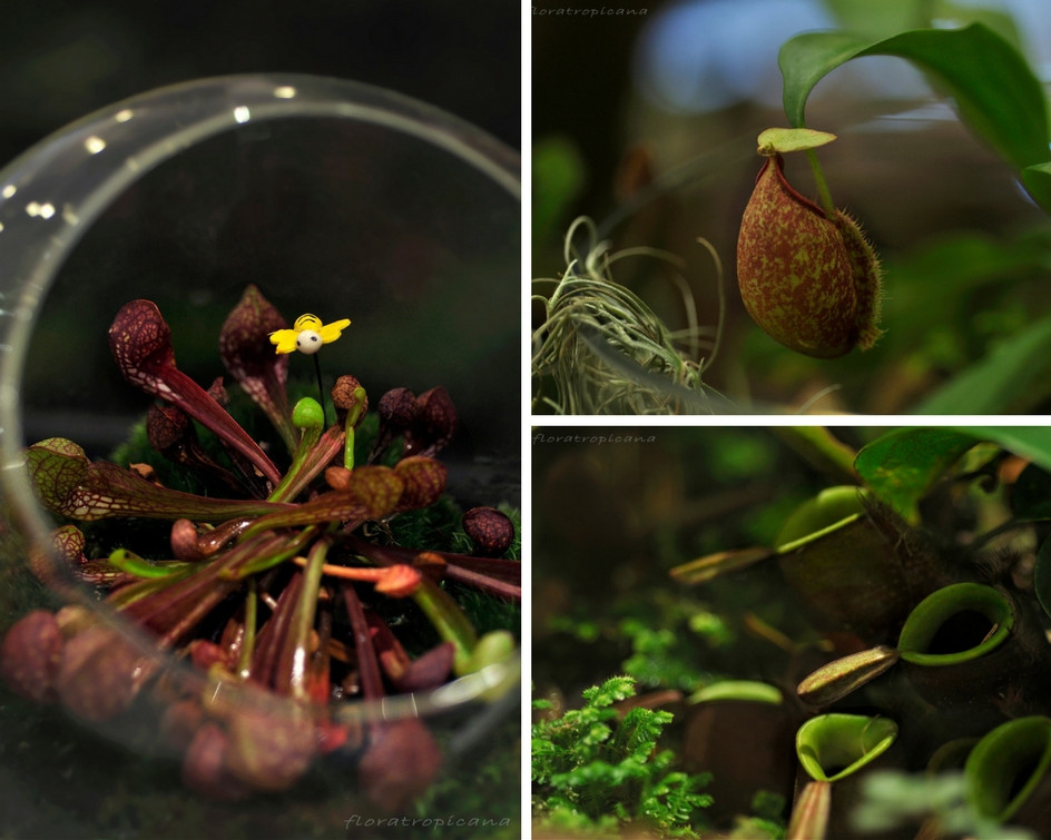 Decorating With House Plants, Singapore Garden Festival