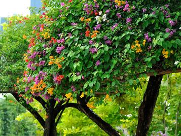 Singapore Garden Festival- Relacja cz.4