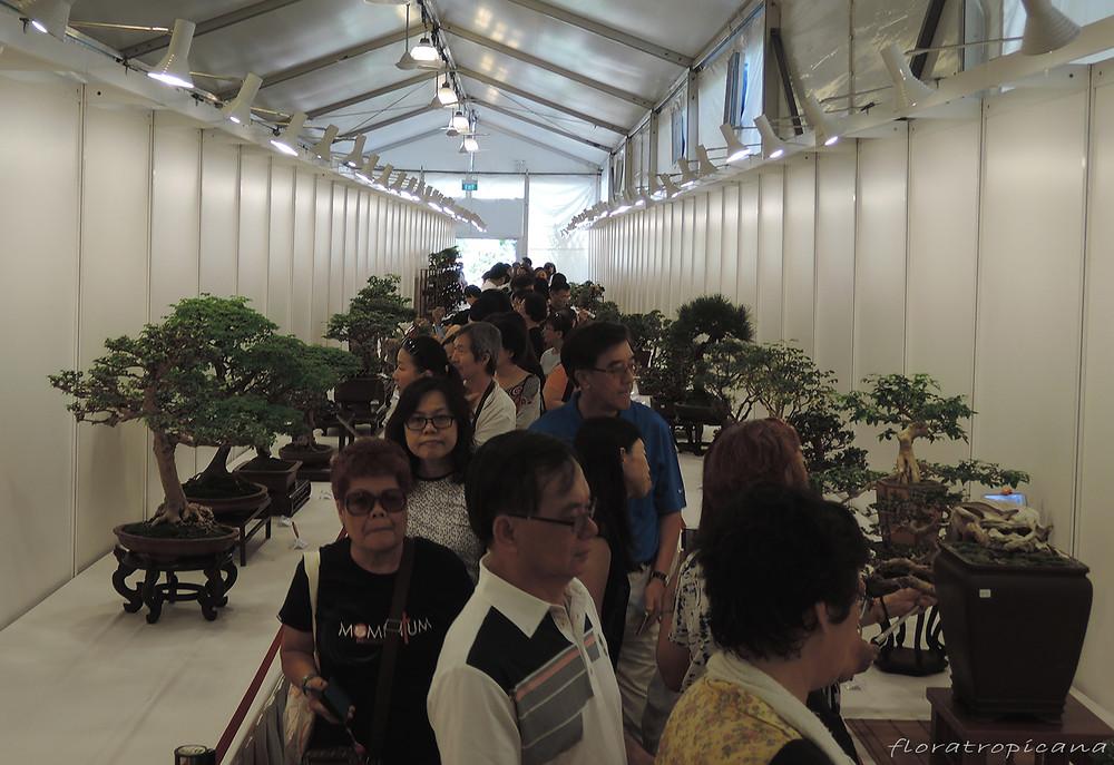 Bonsai show, Singapore Garden Festival
