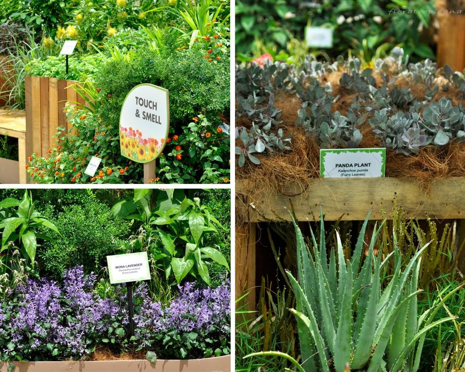 Edible plants, Singapore Garden Festival
