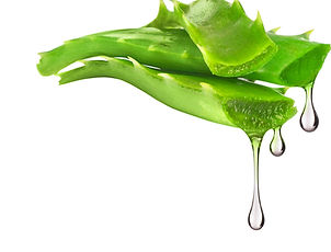 Essence%20from%20aloe%20vera%20plant%20d