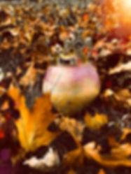 TurnipFall.JPEG