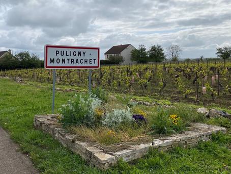 Dégustation à Puligny-Montrachet (21)