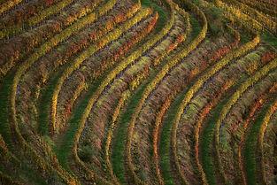 Vignes d'Iroule¦üguy.jpg
