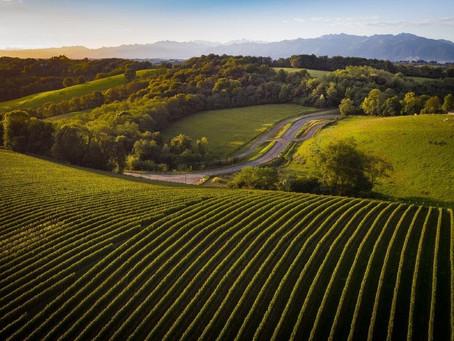 La photo du jour : le vignoble de Jurançon (64)