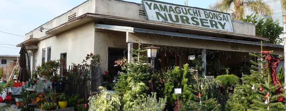 Yamaguchi Bonsai Nursery