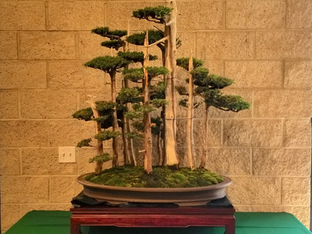 California Bonsai Society's 62nd Anniversary Exhibition Completed