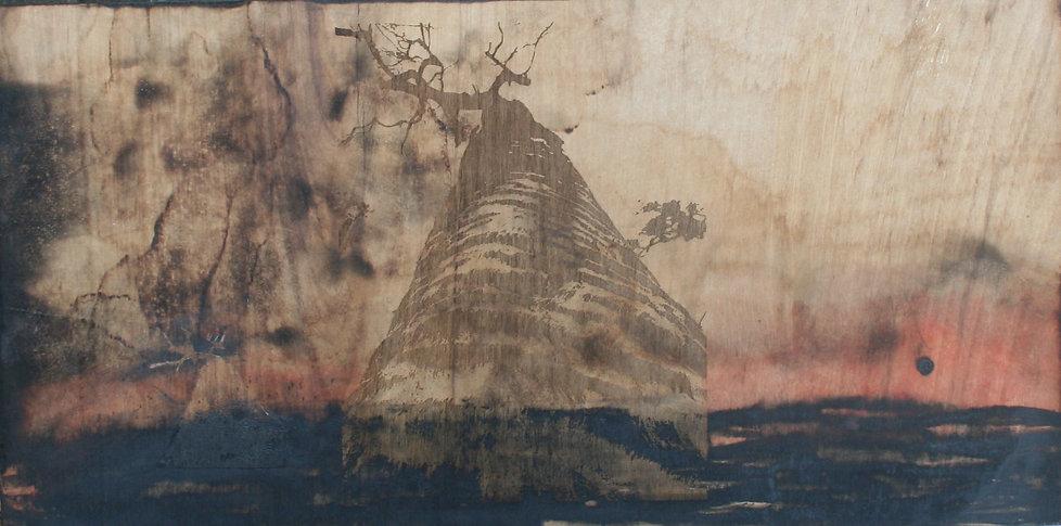 Regeneration Mt Barney - Lower Portals Discoveries I_ Janine Healy.JPG