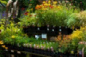 outdoorplants.jpg