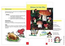Prävention Pilze sammeln 36 Seiten