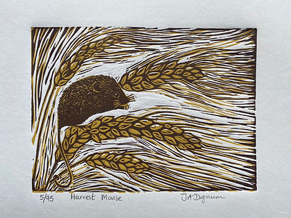 Harvest Mouse. Linocut