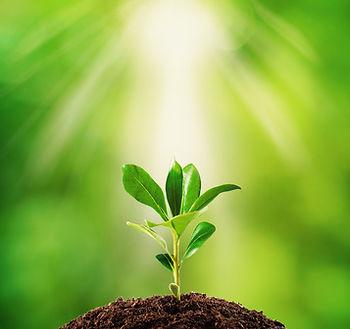 Wachsende Pflanze der psychotherapeutischen Praxis nach HeilprG