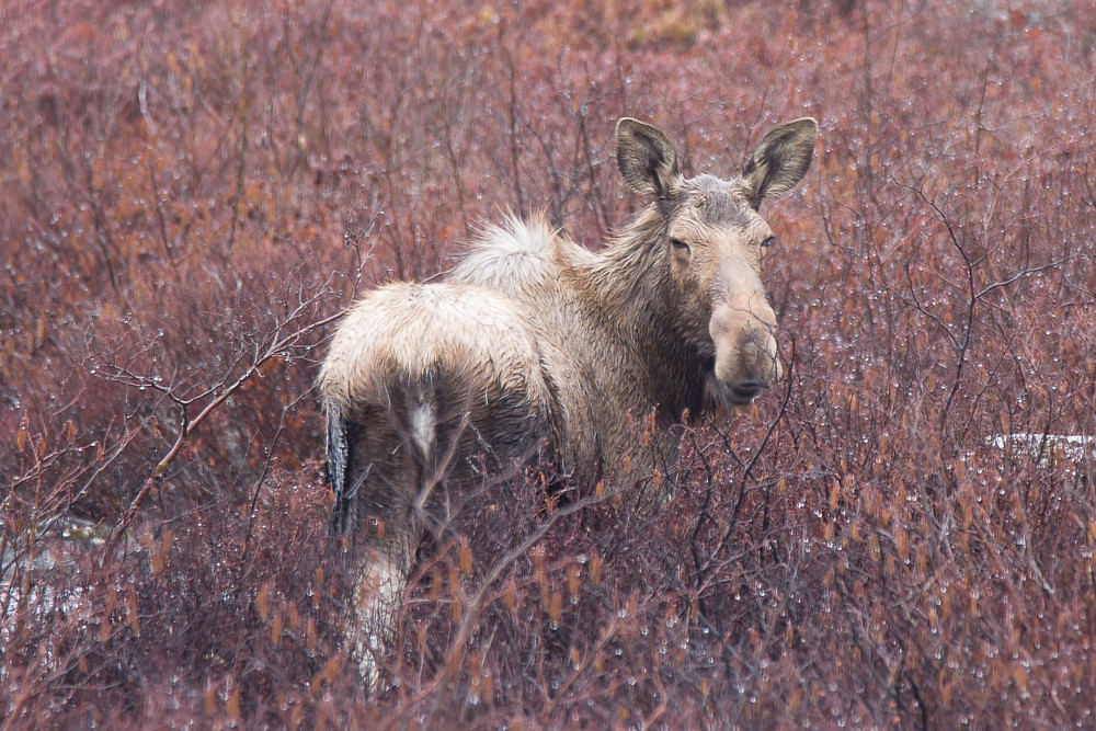 Wild Moose Travel when in Canada Recommendations Adventure Canada