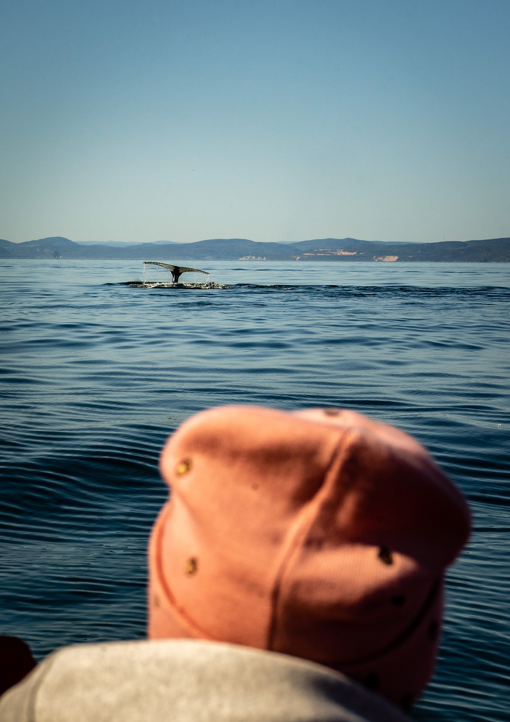 Whale Watching in Canada with a whale showing it's tail Tadoussac