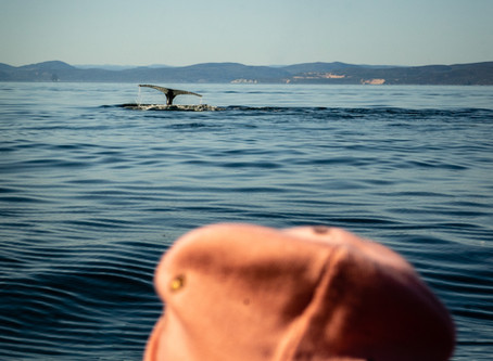 Whale Watching in Canada is incredible on the St Laurent in Quebec | Tour Canada