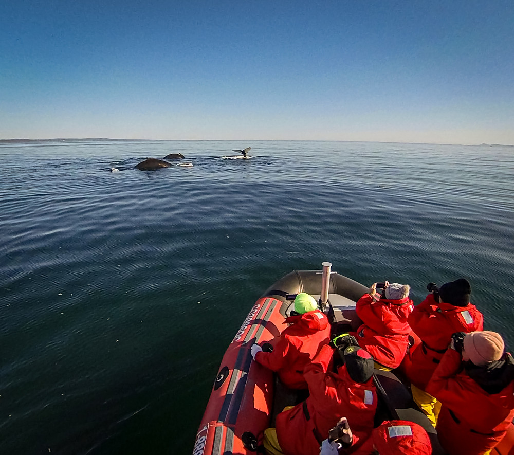 Out Here Travel Canada Tour goes Whale Watching Sees 3 whales at once