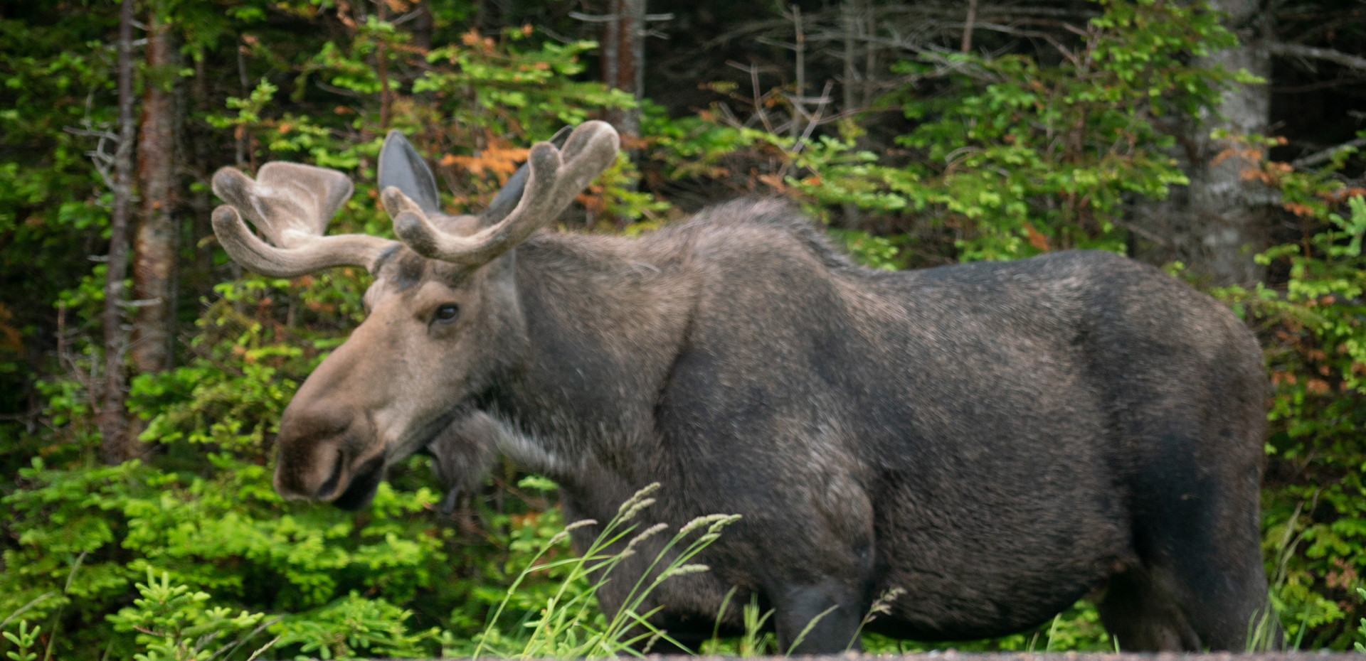 Witness wildlife in our National and Provincial Parks