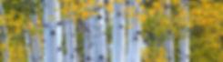 Aspen info sheet banner quality.jpg