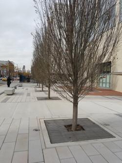 Brooklyn Navy Yards Tree Grate