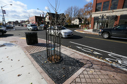 Windsor Star - Tree Grates and Guards