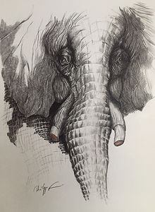 20190930 PFA Elephant.jpg