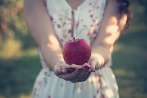 apple orchard red apples rockford photographer