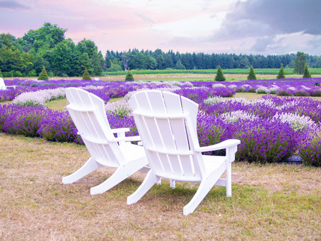 Fragrant Isle Lavender Field at Washing Island - a ​dream location for photographers