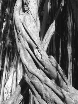 Banyan dancer twirls upward