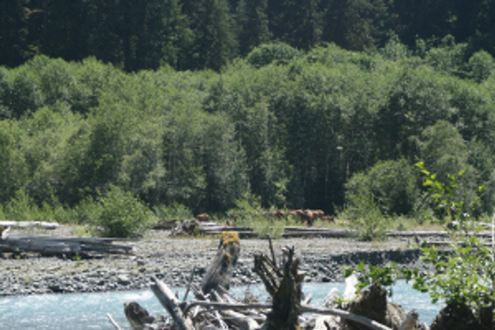 Photo Dianne Gardner Roosevelt Elk