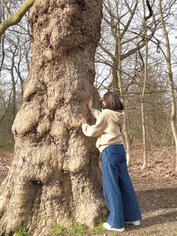 enlacer un arbre.jpg