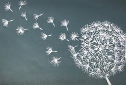 dandelion clock grey
