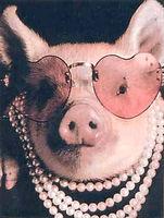 Funny pig.jpg