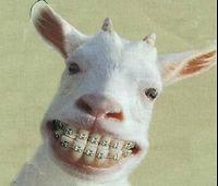 Funny goat.jpg