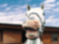 Funny horse.jpg