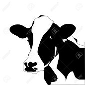 cow head.jpg