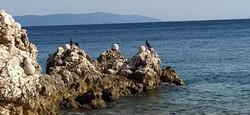 Kormorane an der Bucht von Rabac