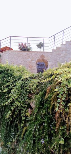 Buddhas friedvoller Blick ruht auf uns