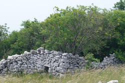 typisch istrische Steinmauer